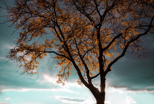 A picture of a tree with it's leaves changing colors.