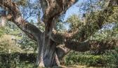 City Park Botanical Gardens