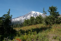 Wildflowers and Mount Rainier