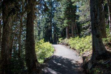 Hiking Trail Mt. Rainier National Park