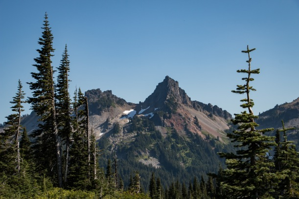 Pacific Northwest Pines and Tatoosh Mountains