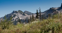 Mt. Ranier National Park Wildflowers and Tatoosh Mountains