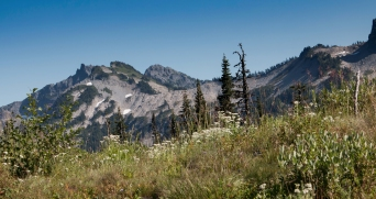 Mt. Ranier National Park Wildflowers and Tatoosh Mountains